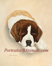 St Bernard Dog Portrait Art - Pet Portraits by Cherie Vergos