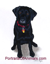 Black Lab Dog Portrait - Pet Portraits by Cherie