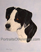 Pit Bull Mix Portrait