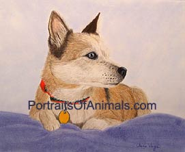 Australian Cattle Dog Portrait - Pet Portraits by Cherie Vergos