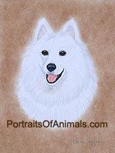 Samoyed Dog Portrait - Pet Portraits by Cherie