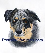 Australian Shepherd Portrait - Pet Portraits by Cherie Vergos