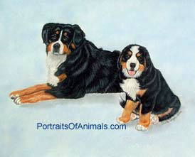 Bernese Mountain Dogs Portrait - Pet Portraits by Cherie
