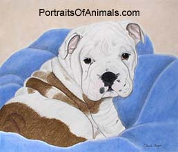 English Bulldog Puppy Portrait - Pet Portraits by Cherie
