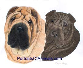 Chinese Sharpei Dog Portrait - Pet Portraits by Cherie