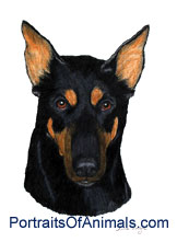 Doberman Dog Portrait - Pet Portraits by Cherie