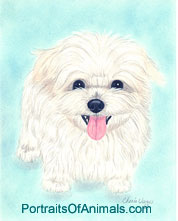 Maltese Dog Portrait - Pet Portraits by Cherie