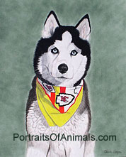 Siberian Husky Dog Portrait -Pet Portraits by Cherie Vergos