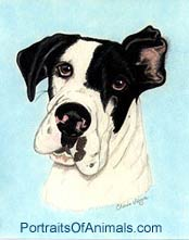 Great Dane Dog Portrait - Pet Portraits by Cherie