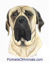 Mastiff Dog Portrait - Pet Portraits by Cherie