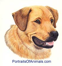 Lab and Rottweiler Mix Dog Portrait - Pet Portraits by Cherie