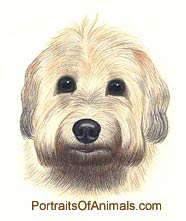 Soft Coated Wheaten Terrier Dog Portrait - Pet Portraits by Cherie