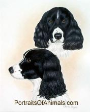 Springer Spaniel Dog Portrait - Pet Portraits by Cherie