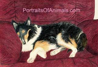 Collie Portrait - Pet Portraits by Cherie Vergos