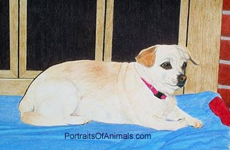 Chihuahua/Pekingese Mix Dog Portrait - Pet Portraits by Cherie