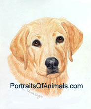 Yellow Lab Dog Portrait - Pet Portraits by Cherie