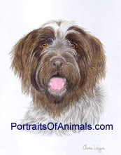 Wire Haired Pointing Griffon Dog Portrait - Pet Portraits by Cherie