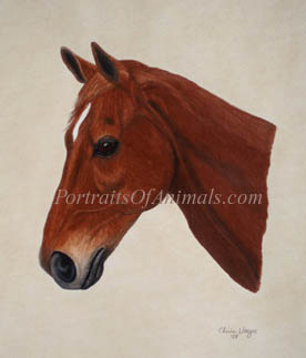 Thoroughbred Horse Portrait - Pet Portraits by Cherie Vergos