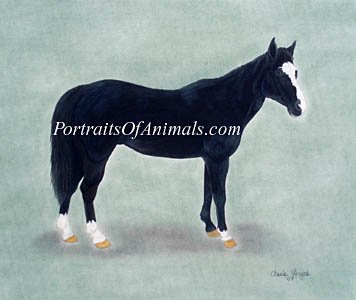 Quarter Horse Portrait- Pet Portraits by Cherie Vergos