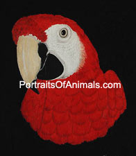 Scarlet Macaw Portrait- Pet Portraits by Cherie