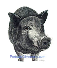 Pot Bellied Pig Portrait