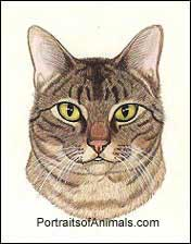 Tabby Cat Portrait- Pet Portraits by Cherie Vergos