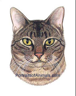 Tabby cat Portrait - Pet Portraits by Cherie