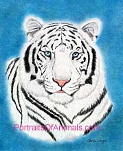 White Tiger Portrait-Pet Portraits by Cherie Vergos